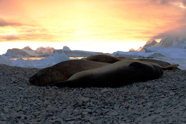 elephant_seals_southcove